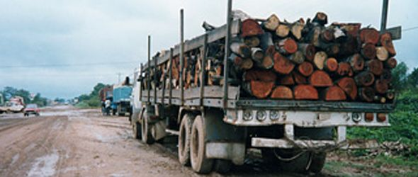 trafico-madera1