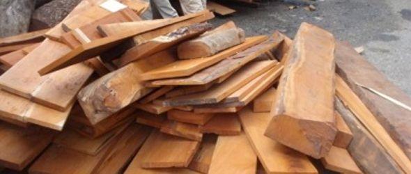madera-incautada-semarena