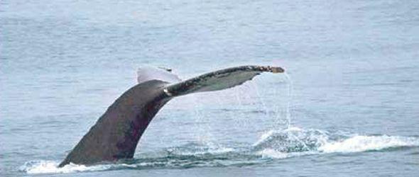 mirador-ballenas-miche