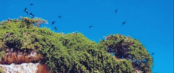 gavilan-los-haitises