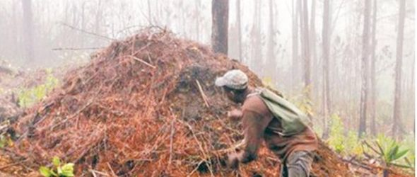 incendio-forestal-sierra-bahoruco2