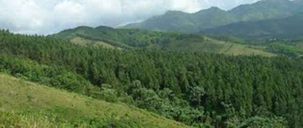 reforestacion-loma-guananito