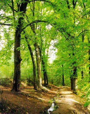 21 de marzo - Día Forestal Mundial