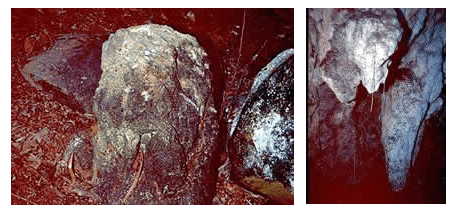 Petroglifos de la guacara de la Cuenca Pequeña