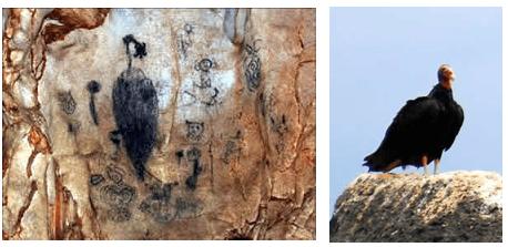 Panel prehispánico y aura tiñosa, carroñera típica de la isla (Cathartes aura).