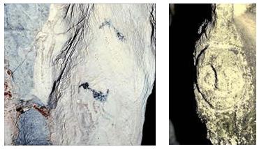 Pinturas y petroglifo tipo cara de lechuza de la guacara de Jenny.