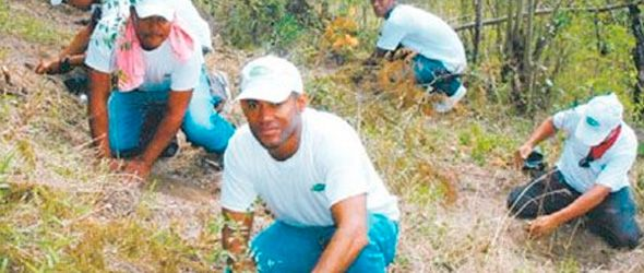 Empleados de la empresa Tropigas reforestan en zona de Dajabón.
