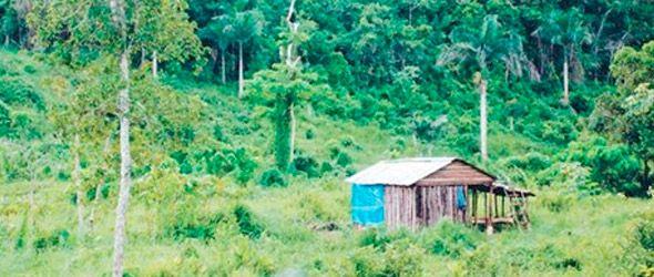 En los últimos años República Dominicana ha visto desaparecer al menos 400 ríos y arroyos, producto de las manos desaprensivas de los taladores