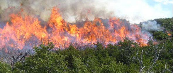 Los fuegos forestales dejaron graves daños