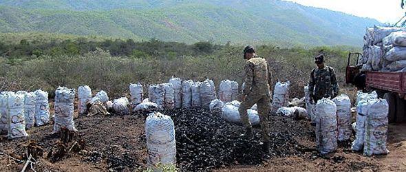 Medio Ambiente incauta 500 sacos de carbón en Duvergé