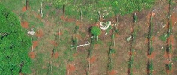 Ambiente destruye siembras ilegales parque Los Haitises