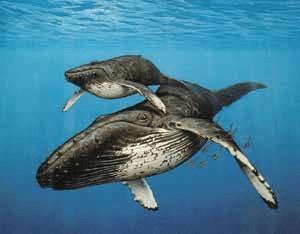 Datos de la Sociedad de Conservación de Ballenas y Delfines (WDCS) indican que en 2009 se cazaron 1,500 ballenas.
