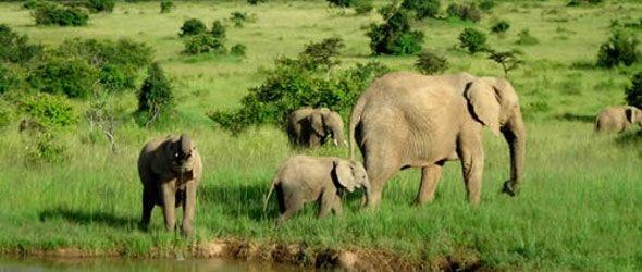 África pierde la mitad de su fauna protegida