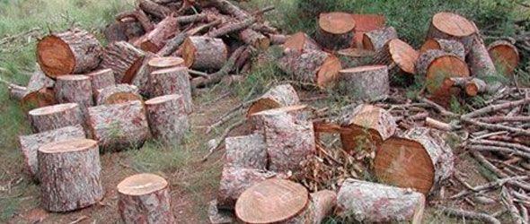 Centroamérica construye estrategia para revertir efectos de la deforestación
