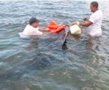 Ballenato es liberado tras encallar en Playa de Manzanillo