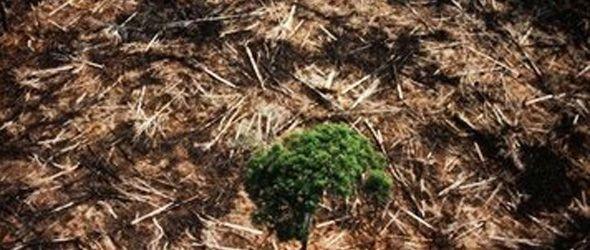Microchips como receta contra la deforestación en Brasil