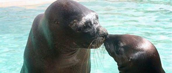 Causa expectación nacimiento de  lobo marino en proyecto turístico Ocean World, de Cofresí