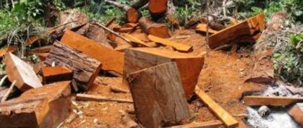 Plan brasileño que lucha contra la deforestación sirve de ejemplo a Latinoamérica