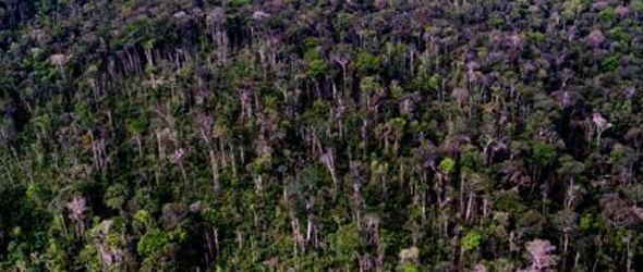 La sequía en el Amazonas de 2010 provocó enormes emisiones de CO2