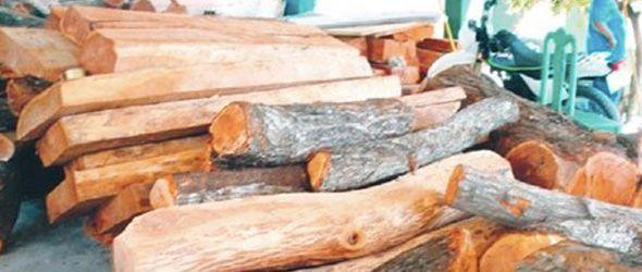 Medio Ambiente decomisa madera ilegal en Enriquillo