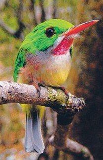 Entidad ambiental pide conservar las aves
