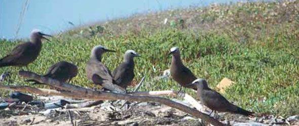 La observación de aves en RD: una industria turística multimillonaria
