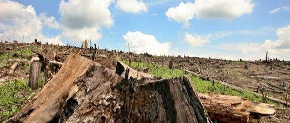 Deforestan Barahona por alto precio GLP