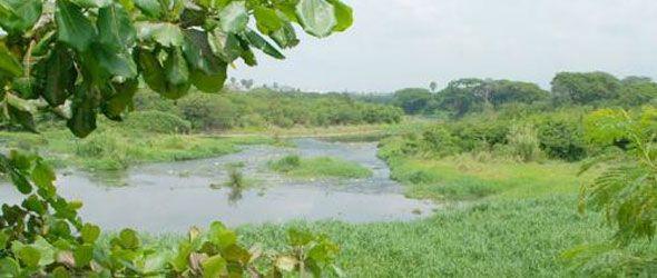 Desaparece caudal río Yaque del Norte a su paso por Santiago