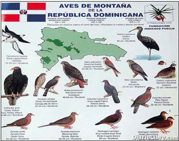 Instrucciones para observar las aves silvestres