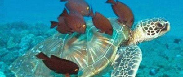 Tortugas de agua dulce en peligro de extinción