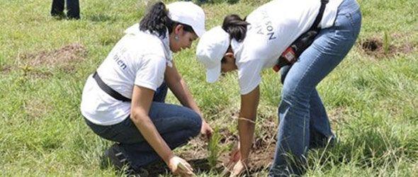 Grupo Popular respalda siembra de árboles