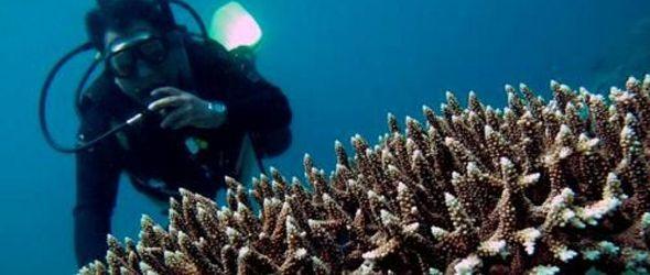 La demanda de coral y animales incita a saquear el fondo marino de Filipinas