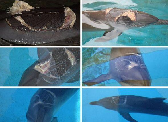 La milagrosa capacidad curativa de los delfines