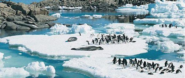 El ecosistema único de la Antártida, en peligro de extinción