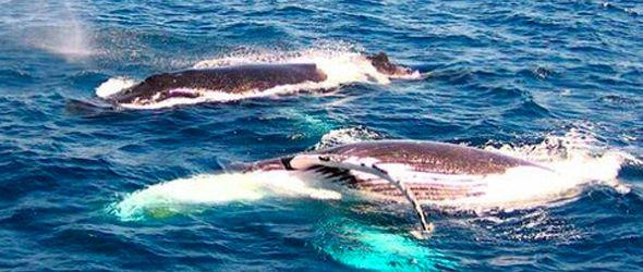 ballenas-varadas