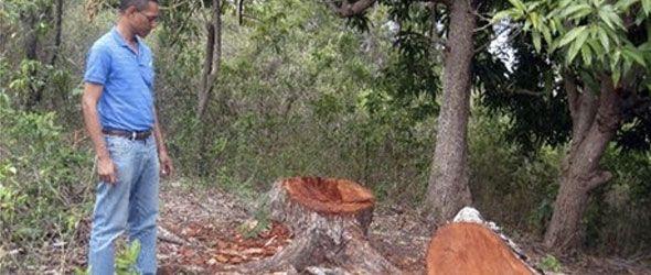 denucian-tala-bosque-madera