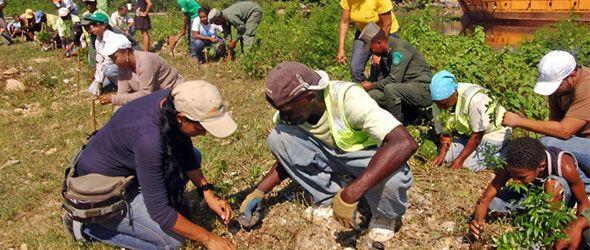 medio-ambiente-reforestacion