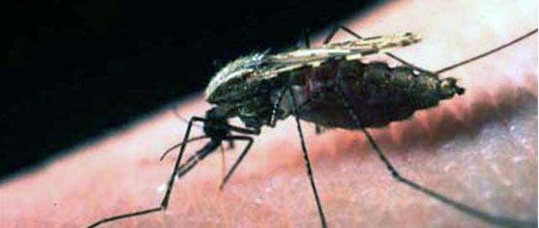 plaga-mosquitos-miami