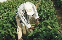 pesticida_article