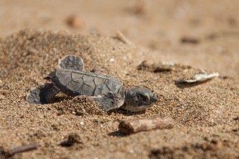 tortuga_nace