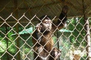 zoologico_moca_requiere_ayuda