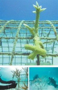 jardineria_corales_2