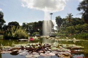 jardin_botanico_celebra