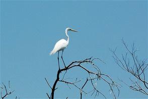 aves_lago
