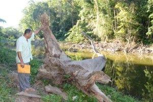 El_secretario_de_la_sociedad_ecologista_de_Solimán,_Primi tivo_Hiraldo,_muestra_como_están_muriendo_árboles_centenar ios_a_orilla_de_la_Laguna,_Hoy/Cortesia Rafael Pujols.1/10/14