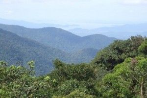 bosques_primarios