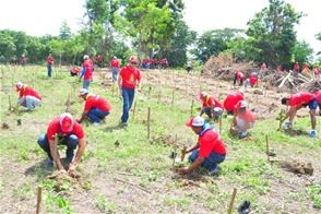 reforestan_para