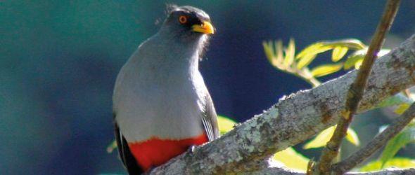Festival de las aves endémicas, dedicado a la Sierra de Bahoruco