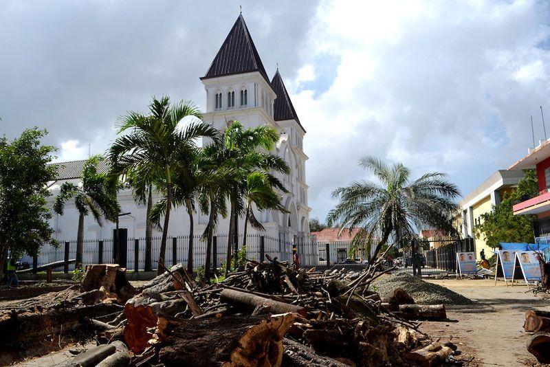 Alcaldía Santiago tala árboles históricos sin autorización de Medio Ambiente.