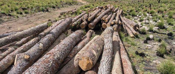 Comunicación grupo #SOSValleNuevo sobre acciones irresponsables del Ministerio de Medio Ambiente y Recursos Naturales en el Parque Nacional Juan Bautista Pérez Rancier (Valle Nuevo)